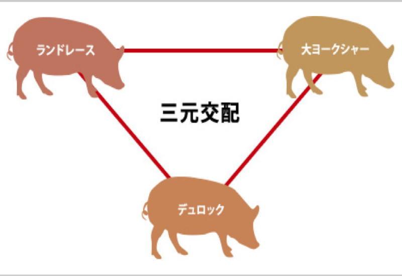 日本の三元豚、その成り立ちLWDって何ですか?