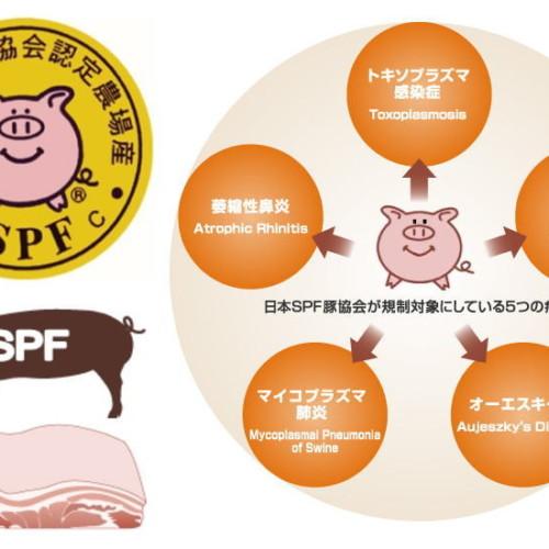 最近評判の豚肉、銘柄豚・SPF豚ってどんな豚?