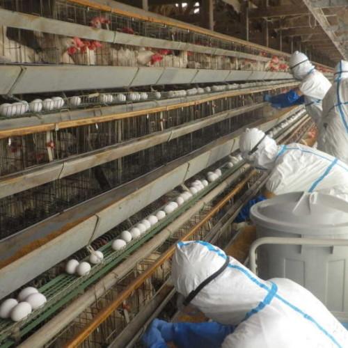 鳥インフルエンザの影響