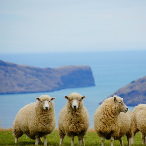 羊肉(マトンとラム)販売の変化