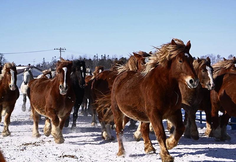 馬刺し・馬肉料理の歴史