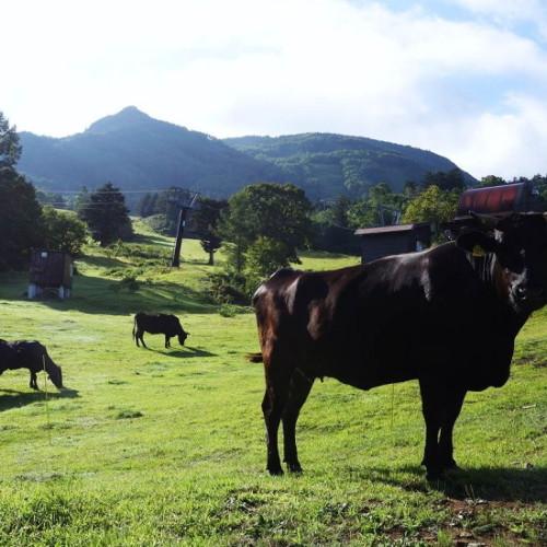 おいしい牛肉を作る(新しい和牛をつくる飼育方法)
