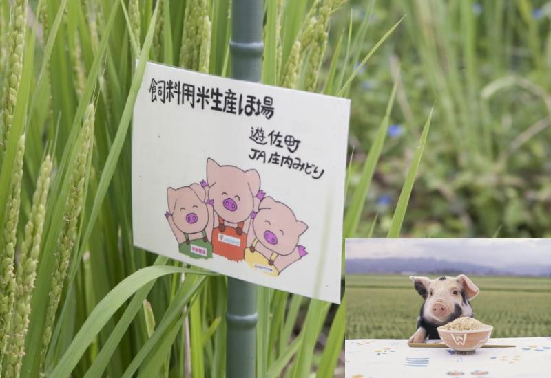 平牧三元豚の特別な飼育方法