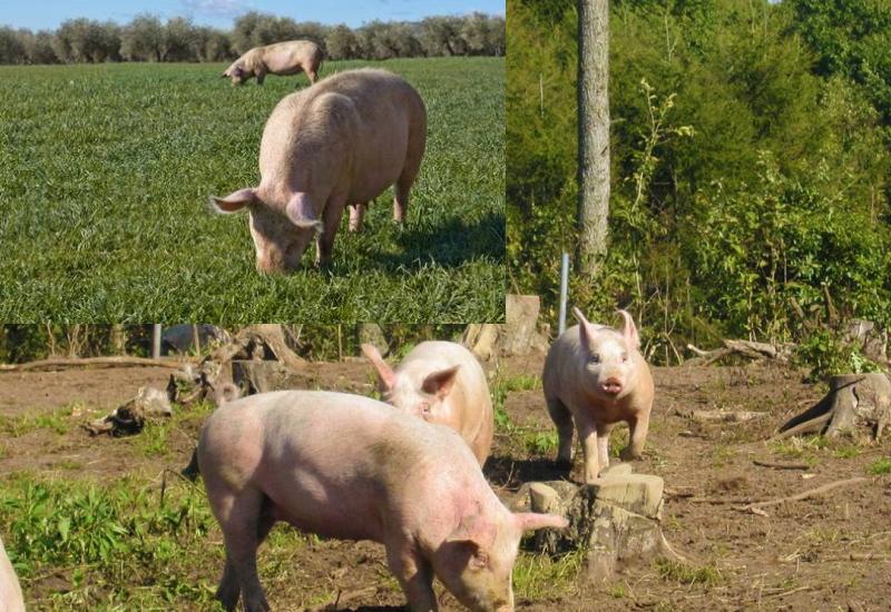銘柄豚とは、いったい何か