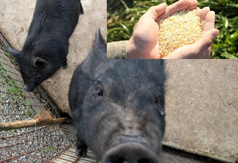 銘柄豚の肉の違いは