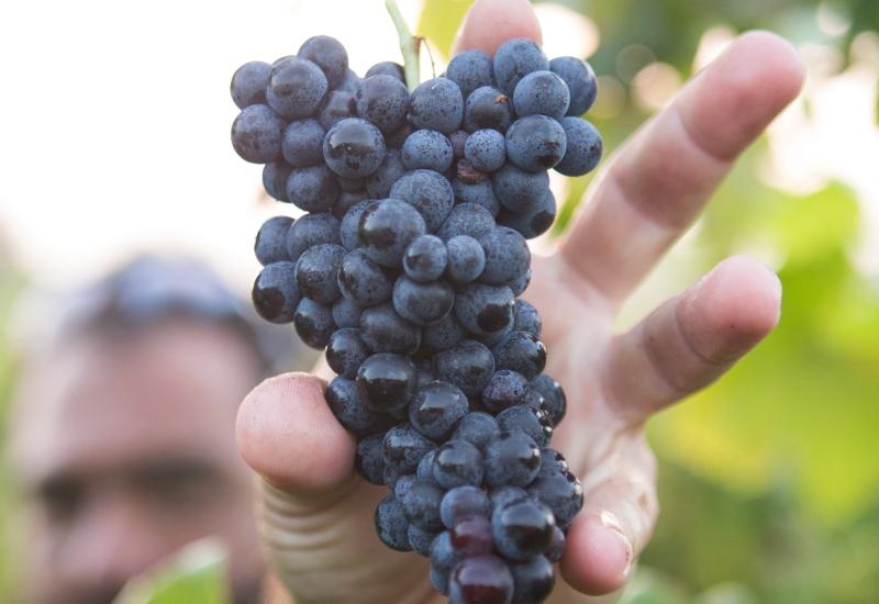 ブドウの品種から選んでみよう