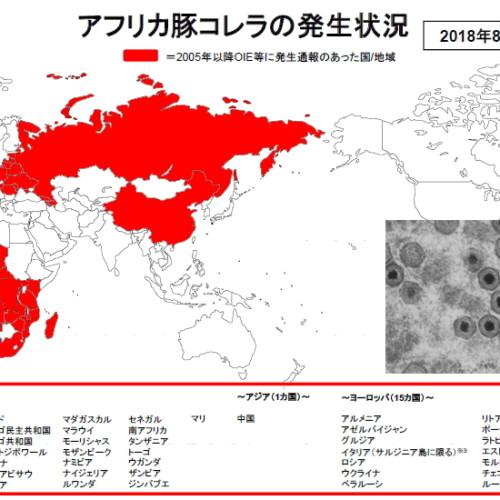 アフリカ豚コレラ「ASF」の恐ろしさ